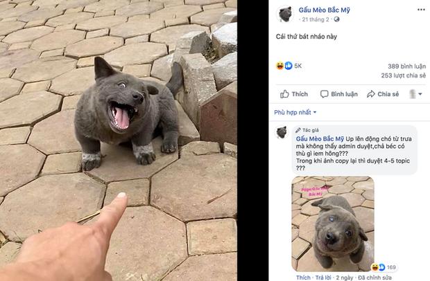 Chú chó hot nhất Facebook gần 1 tuần qua, lập fanpage 4 ngày thu về 32 ngàn lượt thích, ai nhìn cũng muốn nuôi! - Ảnh 8.