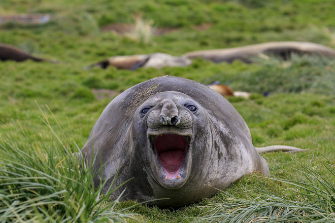 Cười xả tress hiệu quả khi bạn biết động vật cũng có lúc đáng yêu thế này - Ảnh 3.