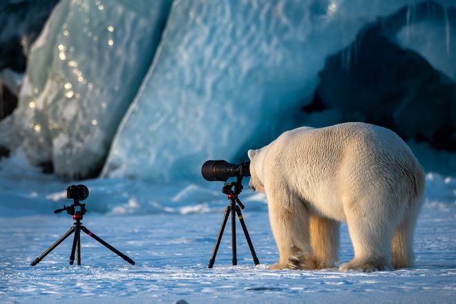 Cười xả tress hiệu quả khi bạn biết động vật cũng có lúc đáng yêu thế này - Ảnh 2.